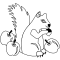 asso_ecureuils
